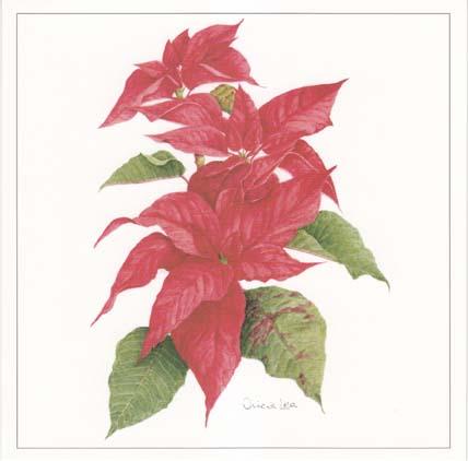 CHR033 Poinsettia