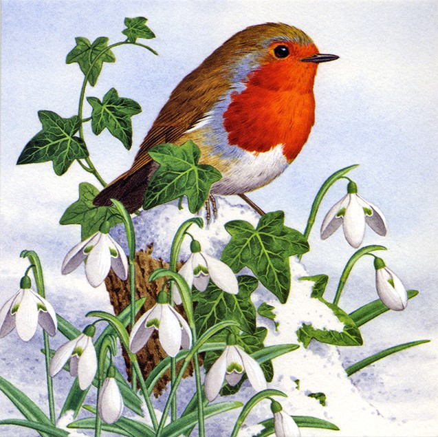 Christmans Card Robin Amongst the Snowdrops
